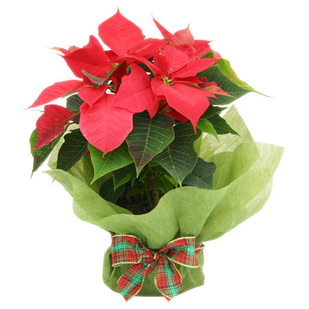 Festive Flower Arrangements and Deliveries This Holiday Season