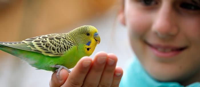 birds as pets
