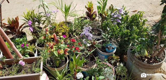#MyGreenCDO - Home Garden